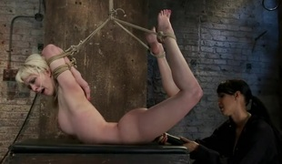 Blond fastened into modified Category 4 HogtiedSucks cock, punished to the limit of her flexibility!